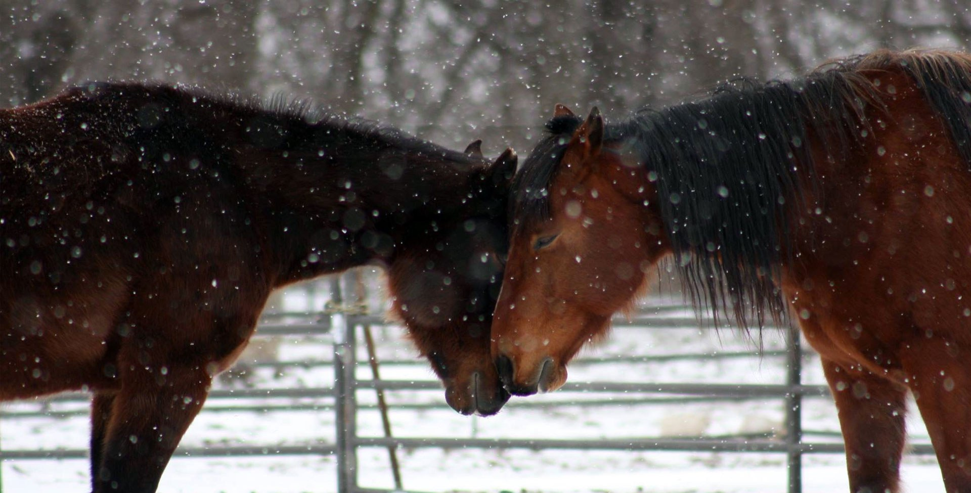 image of two horses in snow